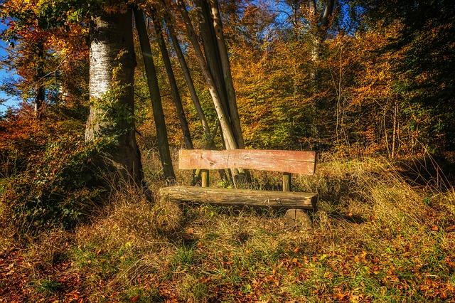 lavička v lese.jpg