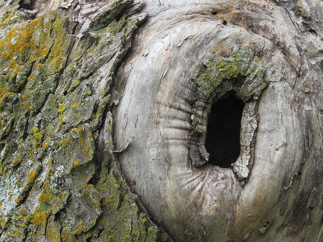 díra ve stromě.jpg
